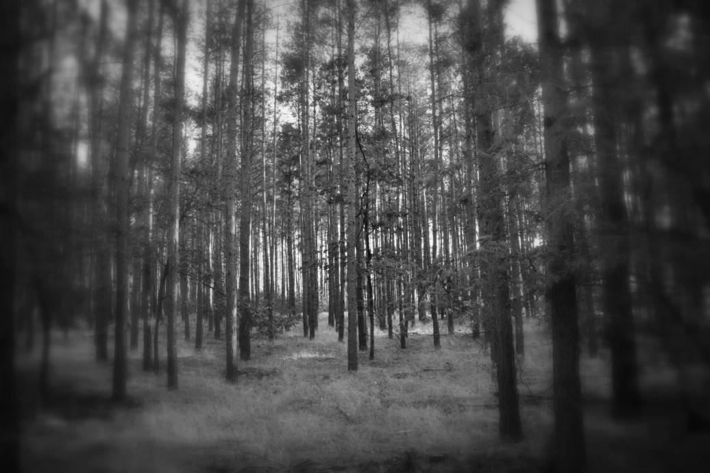 Bäume sw holga