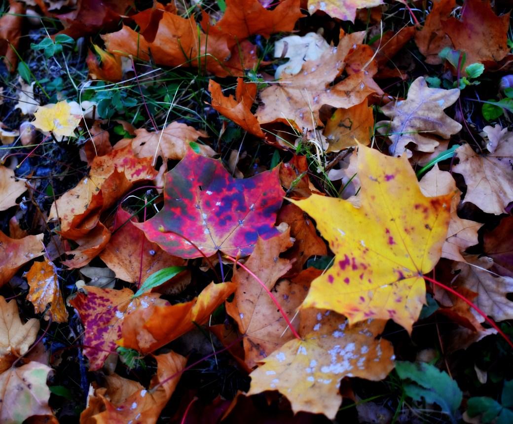 Herbstleuchten - Kopie - Kopie