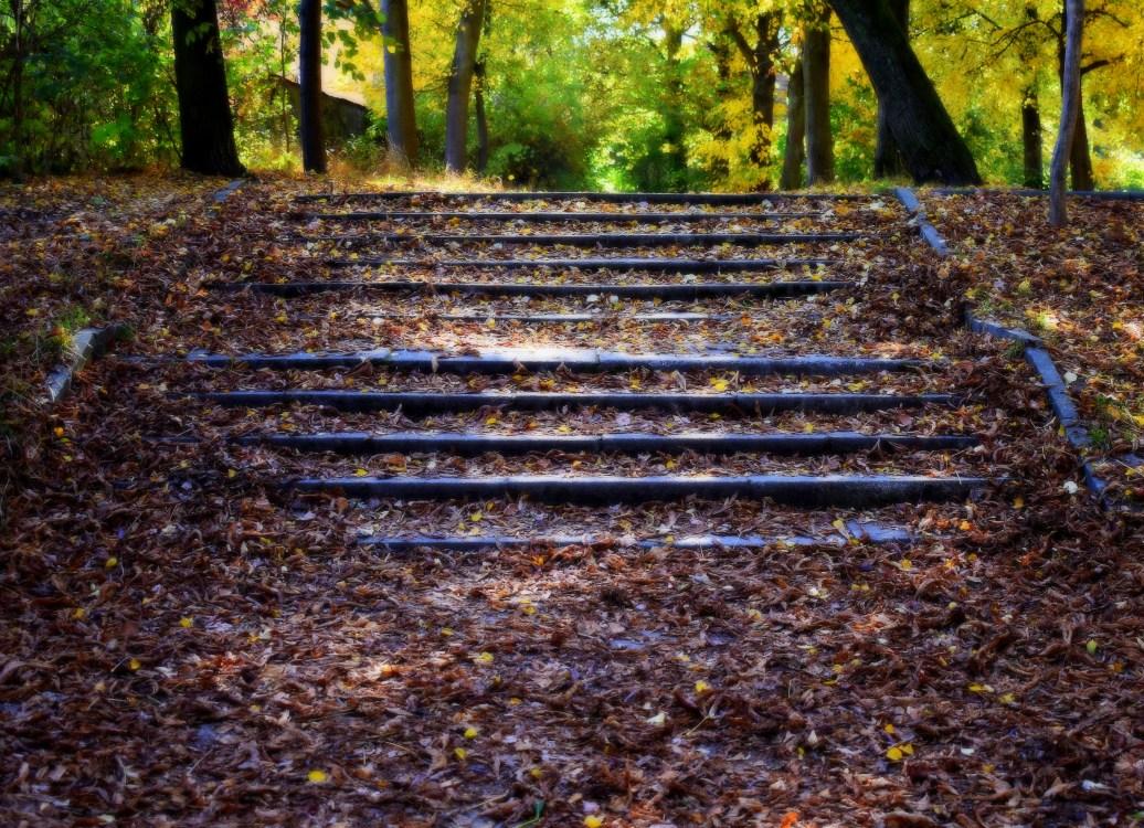 Treppe mit laub