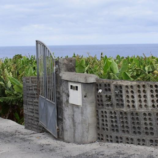 Bananenplantagen am Meer