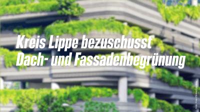 Beitragsbild Kreis Lippe bezuschusst Dach- und Fassadenbegrünung