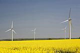 Windenergieanlagen an Rapsfeld