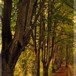 Herbstliche Allee-RGB
