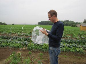 Tomaten einpflanzen Plastikhülle