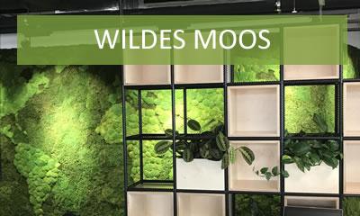 Wildes Moos