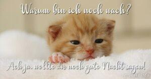 Whatsapp Gute Nacht Bilder Lustig Kostenlos 29 Best Gute Nacht