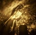 Död fågel i regntunna 2.