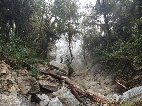 Fog in the rain forest - Inca Trail
