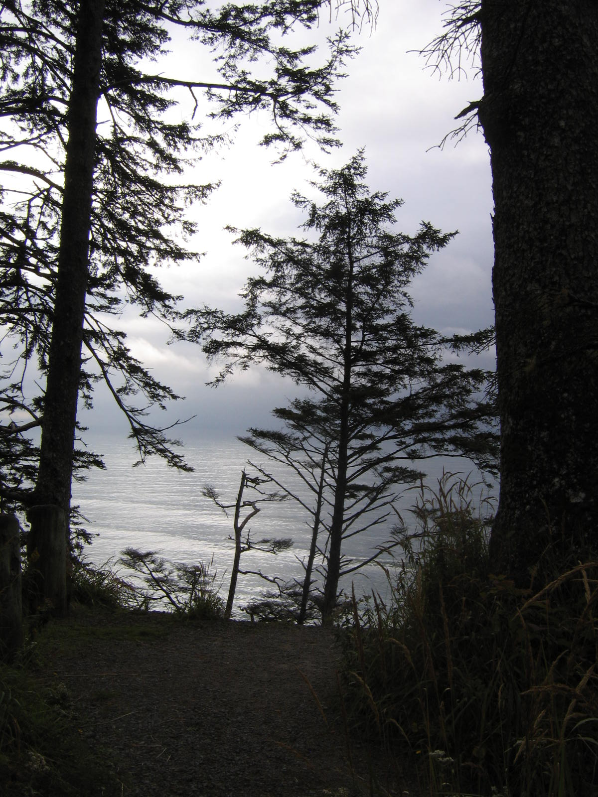 Trees Over Pacific