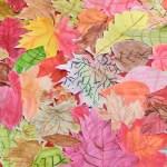 Kunst In Der 4 Klasse Ein Teppich Bunter Herbstblatter Gerhart Hauptmann Grundschule Grunheide Mark
