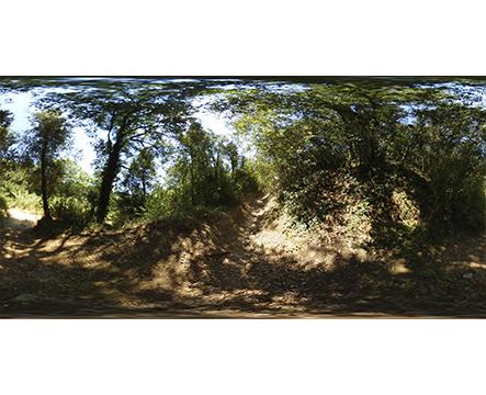 Imagen 360 en el bosque miniatura