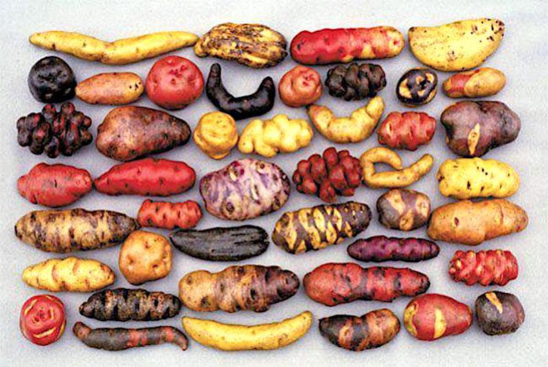 Historia, influencias en la Gastronomía Peruana