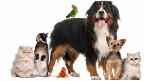 Resultado de imagem para animais em condominios
