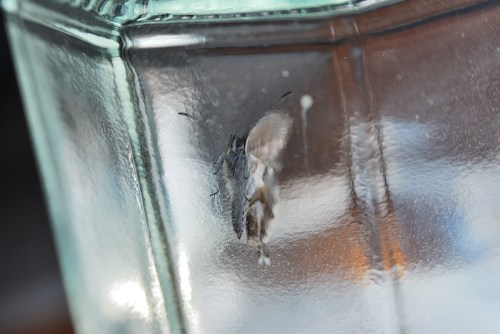 Description Mariposa en vaso 1 Date 6 September 2012, 14:38 Source Mariposa en vaso 1 Author David Santaolalla from León, spain  This image was originally posted to Flickr by Cebolledo at https://flickr.com/photos/83413162@N00/7944517892. It was reviewed on 11 June 2017 by FlickreviewR and was confirmed to be licensed under the terms of the cc-by-2.0.