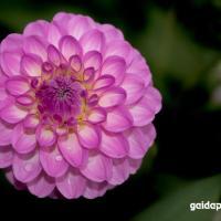 Blüten aus dem Spätsommer