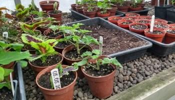 stekjes van kamerplanten