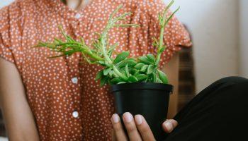 Persoon die plant vasthoudt