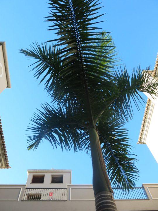 9. 24.11.13 - Palmesus