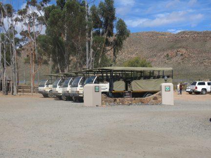 24. Safaribilene