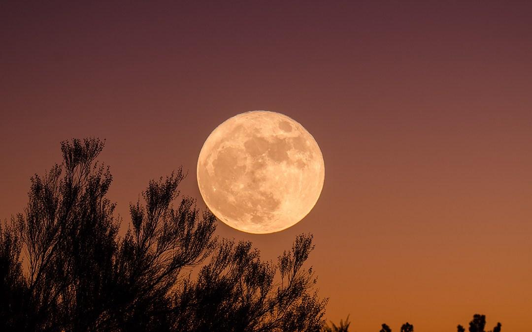 moon over 401