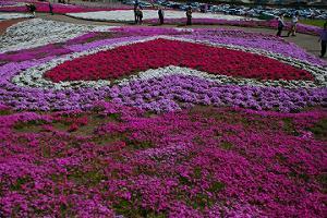 関東芝桜みさと
