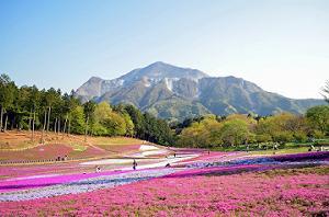 関東芝桜羊山公園