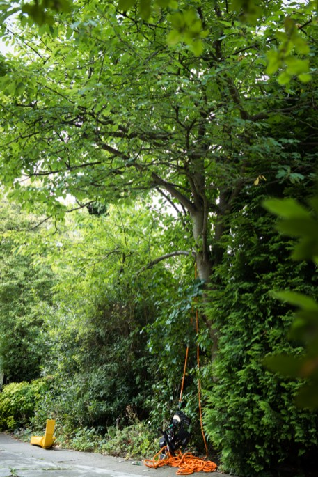 Cherry Tree Removal, Derbyshire 01