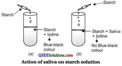 GSEB Solutions Class 10 Science Chapter 6 Life Processes
