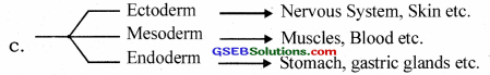 GSEB Solutions Class 12 Biology Chapter 3 Human Reproduction 24