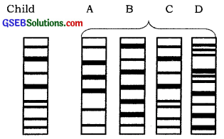 GSEB Solutions Class 12 Biology Chapter 6 Molecular Basis of Inheritance 9