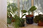 My lovely plants_GSH Interior design