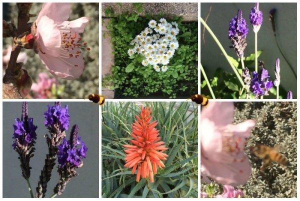 collage_spring_garden