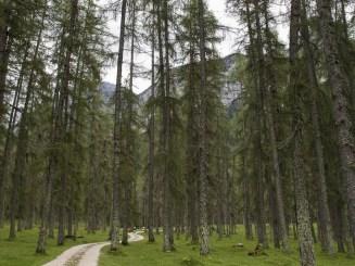 Bosques austríacos (por Javi)