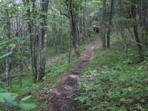 opción que nos interna en un bonito bosque con camino complicado (por Javi)