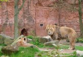 2017-05-04 Zoo Hannover 072-be-kl