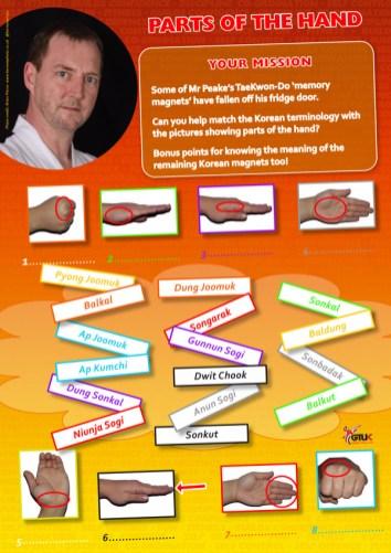 Taekwondo Parts of the Hand