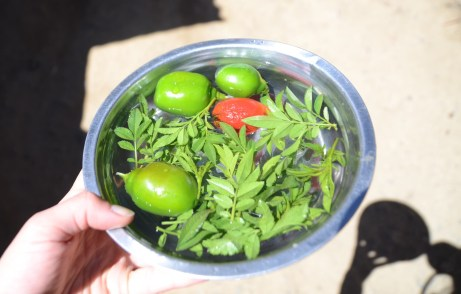 Rocoto and huacatay to make a chilly sauce