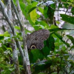 Butterfly at pilpintuwasi