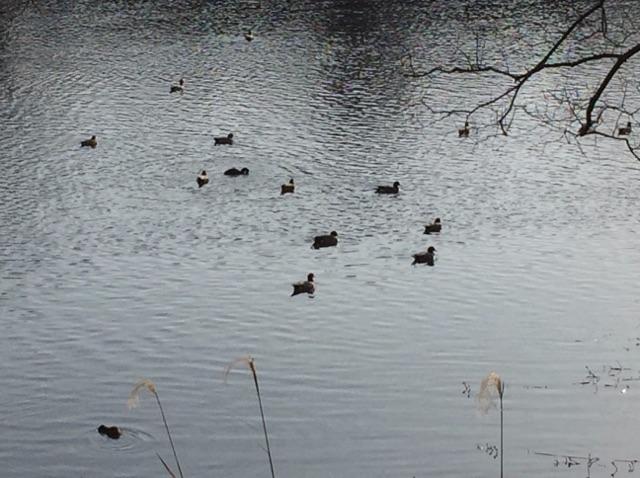 江津湖 野鳥