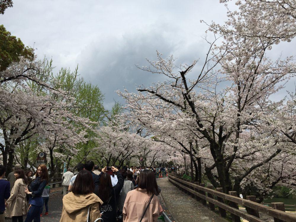 熊本城行幸坂