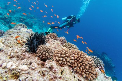 Réserve Cousteau les îles Guadeloupe