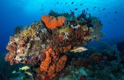 Réserve Cousteau les Îles de Guadeloupe