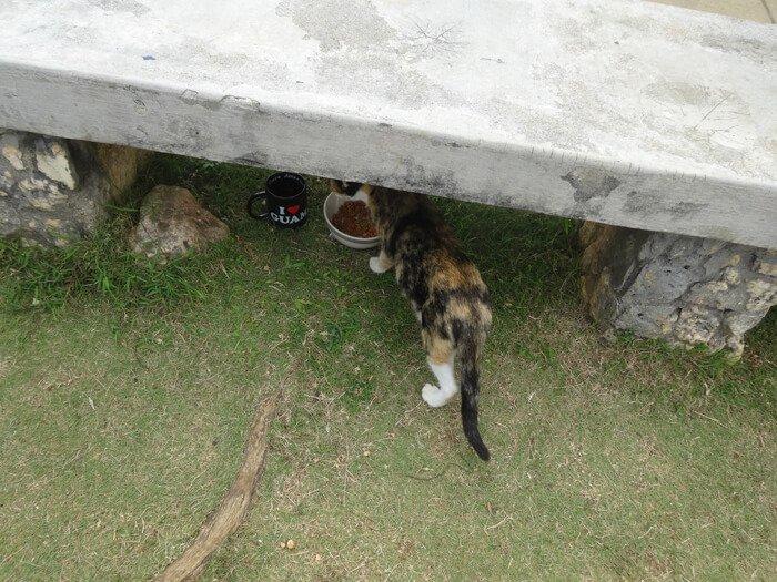 グアム恋人岬の猫