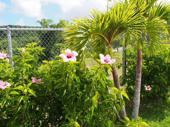 ホテルニッコーグアムの花