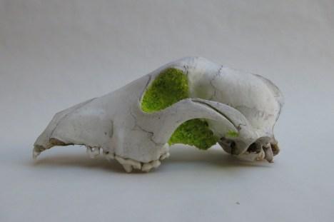 Sugar and bone sculptures by Caroline Doherty (USA).