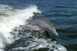 Delfine & Wale beobachten