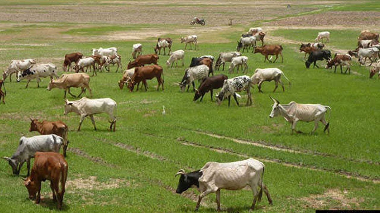 Cattle - Stakeholders conclude work on policy document to drive Livestock Transformation Initiative, others