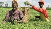 Image result for Nigerian govt promises to assist women in agriculture