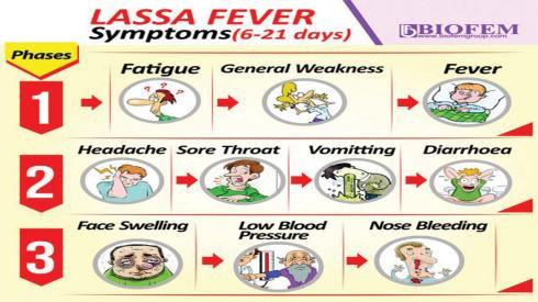Image result for lassa fever