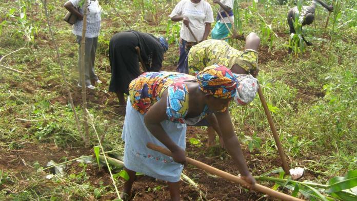 Ondo women farmers allege marginalisation | 1